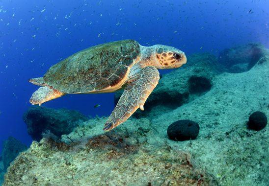 antalya korfezini denizanasi istilasindan kaplumbagalar koruyor 1
